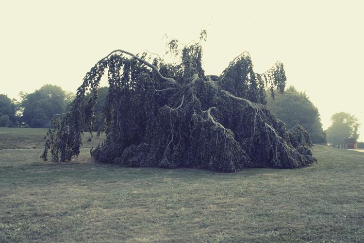 lexpop_alexander_trattler_tree_fog